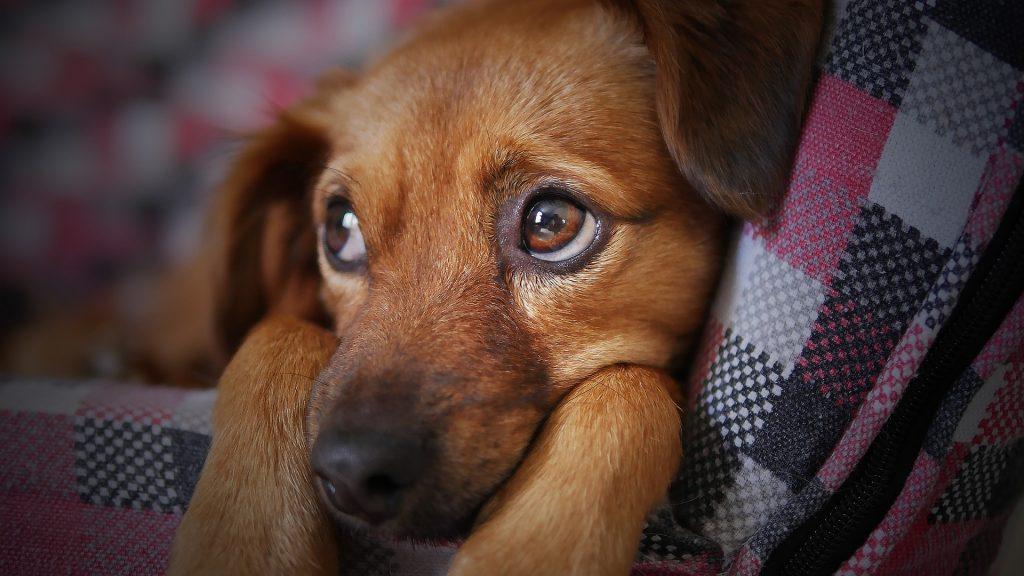 Tierkommunikation - Was ist dran? auf meinekleinetestseite.de