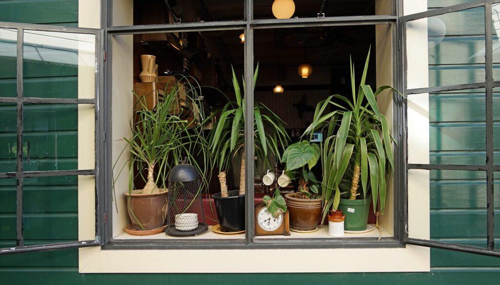 Geschmackvolle Zimmerpflanzen auf meinekleinetestseite.de
